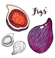 Hand drawn figs vector image