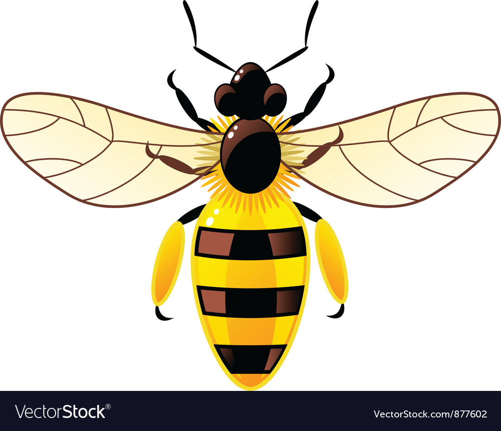 Bee isolated on white vector