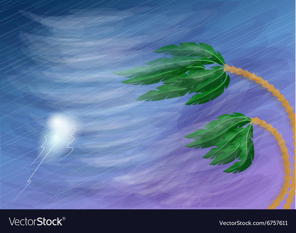Hurricane and palm vector