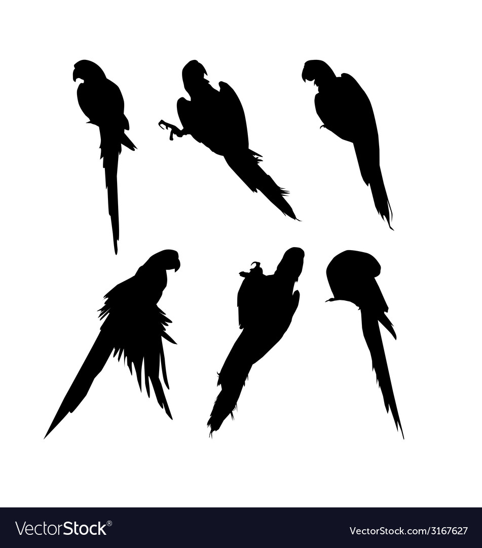 Macaw birds silhouette set vector