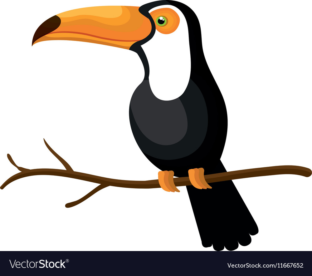 Toucan bird exotic icon vector