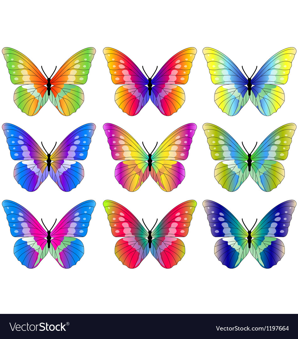 Butterfly collection vector