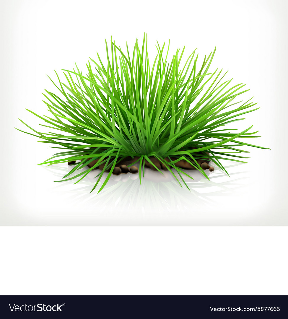 Fresh grass icon vector