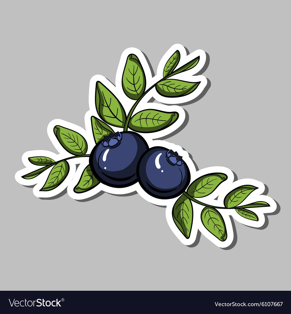Blueberrysticker vector