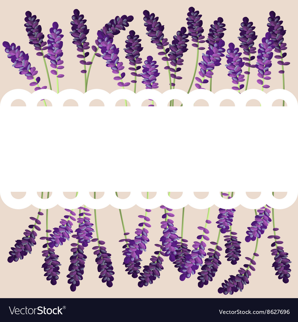 Row of lavender flowers behind frill banner vector