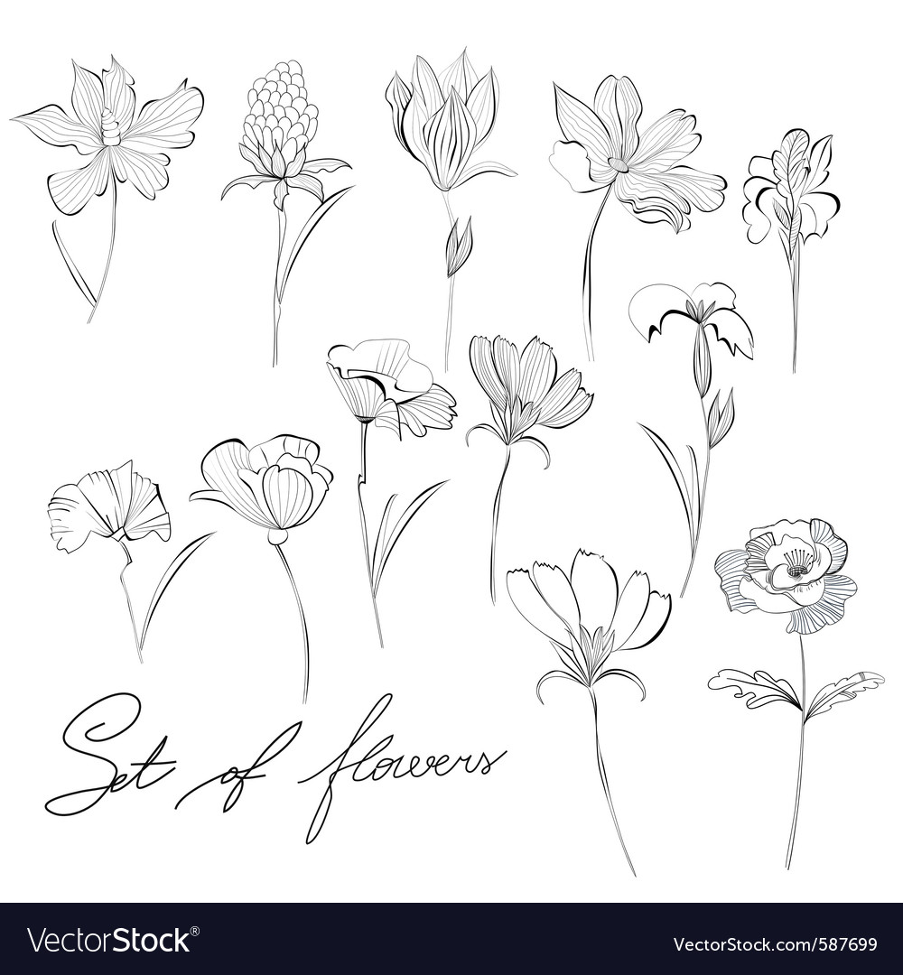 Sketch of flowers vector