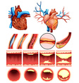 Heart cholesterol vector image