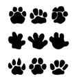 footprints of hippopotamus vector image