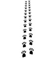 paw trail paw prints animal cat dog footprints vector image