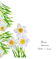 Background with Narcissuses1-04 vector image
