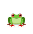red eye frog front view vector image