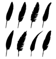 group of feather vector image