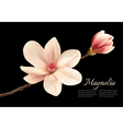 Beautiful white magnolia flower isolated on a vector image vector image