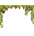 red grape floral frame vector image