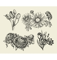 Flowers Hand drawn sketch flower tulip astra vector image vector image