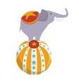 elephant circus ball show vector image