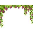 red grape floral frame vector image