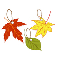 Labels of autumn leaves vector image vector image