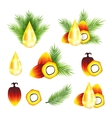 Oil palm fruits with leaves vector image