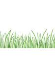 watercolor green grass vector image