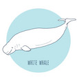 White whale vector image