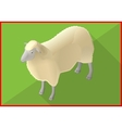 Sheep isometric flat 3d vector image