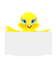 Young chick vector image