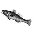 Black Goby vintage engraving vector image