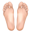 Healthy feet vector image