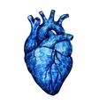 Human heart vector image