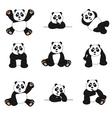 cute panda set vector image