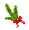 fir tree branch vector image