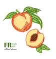 peach branch isolated on white background fruit vector image