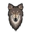 Gray Wolf Head vector image vector image
