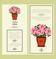 azalea flower in pot banners vector image