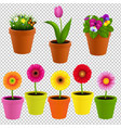 flower in pot collection vector image