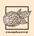 hand drawn raspberry vector image