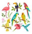 set of tropical birds vector image