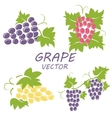 flat grape icons set vector image