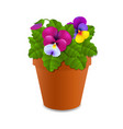 flower pansy vector image vector image
