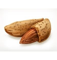 Almonds in shell icon vector image