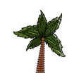 palm tree symbol vector image