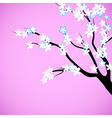 Cherry blossom decorative background vector image vector image