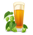 beer and hops vector image