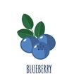 Blueberry icon in flat style on white background vector image