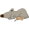 Sleeping rats vector image