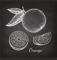 chalk sketch of orange vector image