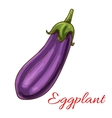 Eggplant vegetable sketch isolated icon vector image