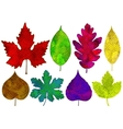 Set of colorful abstract leaves isolated vector image