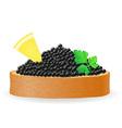 caviar 08 vector image vector image